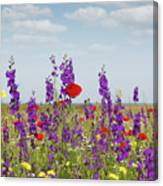 Spring Wild Flowers Meadow Canvas Print
