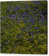 Spring Wildflowers Canvas Print