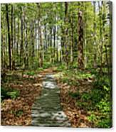 Spring Woods Canvas Print