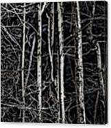 Spring Woods Simulated Woodcut Canvas Print