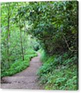 Springing Down The Path Canvas Print