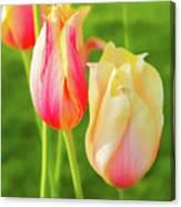 Spring's Garden Canvas Print
