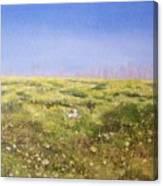 Springtime At Fiesta Island Canvas Print