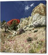 Springtime At Red Rock Canyon Canvas Print