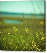 Springtime At The Beach Canvas Print