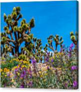 Springtime At The Canyon Canvas Print