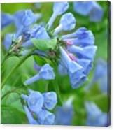 Springtime Bluebells  Canvas Print