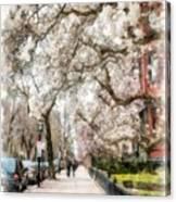 Springtime Boston Back Bay Canvas Print