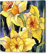 Springtime Daffodils Canvas Print