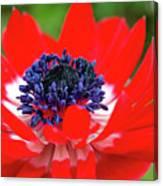Springtime - Flowers Canvas Print