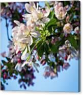 Springtime In Bloom Canvas Print