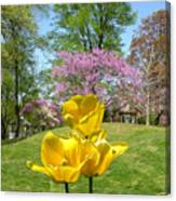Springtime In Bridgeton Missouri Canvas Print