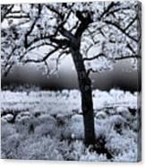 Springtime In Infrared Canvas Print