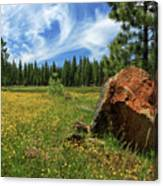 Springtime In Lassen County Canvas Print