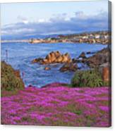 Springtime In Pacific Grove Canvas Print