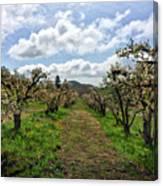 Springtime In The Apple Grove Canvas Print