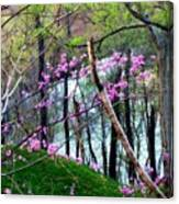Springtime In The Mountains 2 Canvas Print