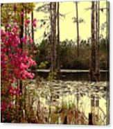Springtime In The Swamp Canvas Print