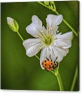 Springtime Ladybug Canvas Print