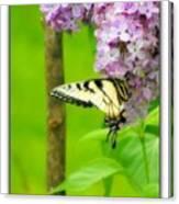 Springtime Splendor Canvas Print
