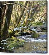 Springtime Stream In The Smokies Canvas Print