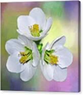 Springtime Triplets By Kaye Menner Canvas Print