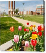 Springtime Tulips Canvas Print