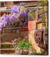 Springtime Wisteria In Old Bisbee Canvas Print
