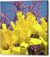 Springtime Yellow Daffodils Art Print Pink Blossoms Blue Sky Baslee Troutman Canvas Print