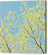 Sprint Blossom  Canvas Print