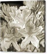 Sprint Flowers B/w 1 Canvas Print