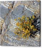 Sprouting Rock Canvas Print