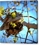 Sprouting Wasp Net Canvas Print
