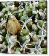 Sprouts And Other Healthy Food Canvas Print