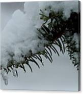 Spruce Needles And Ice Canvas Print