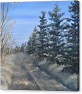 Spruce Trees Along A Snowy Road  Canvas Print