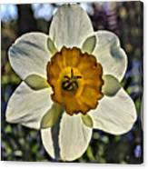 Square Daffydowndilly Canvas Print