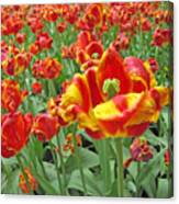 Square Yellow And Red Tulips Canvas Print