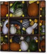 Squash And Gourds In Compartments Canvas Print