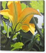 Squash Blossom Canvas Print