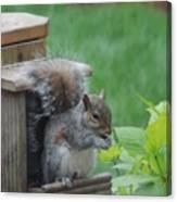 Squirrel 2 Canvas Print