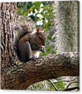 Squirrel 7 Canvas Print