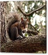 Squirrel 8 Canvas Print