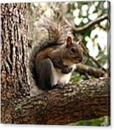 Squirrel 9 Canvas Print