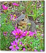 Squirrel Among Coreopsis In Huntington Gardens In San Marino-california   Canvas Print