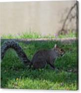 Squirrel At A Stand Still Canvas Print