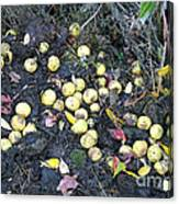 Squirrel Cache In Compost Pile Canvas Print