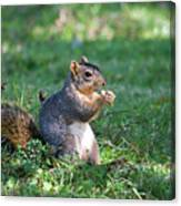 Squirrel Eating A Nut - Eugene Oregon Canvas Print