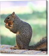 Squirrel Eating Crab Apple Canvas Print