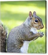 Squirrel Eating Grapes Canvas Print